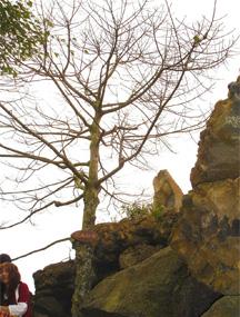 海南海口石山火山群国家地质公园