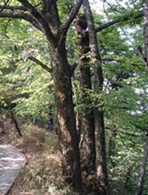 贵州绥阳双和洞国家地质公园